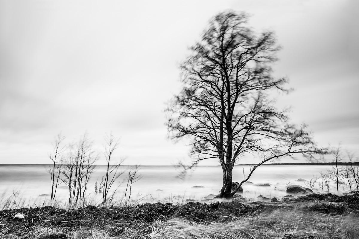 Vētra koku zaros